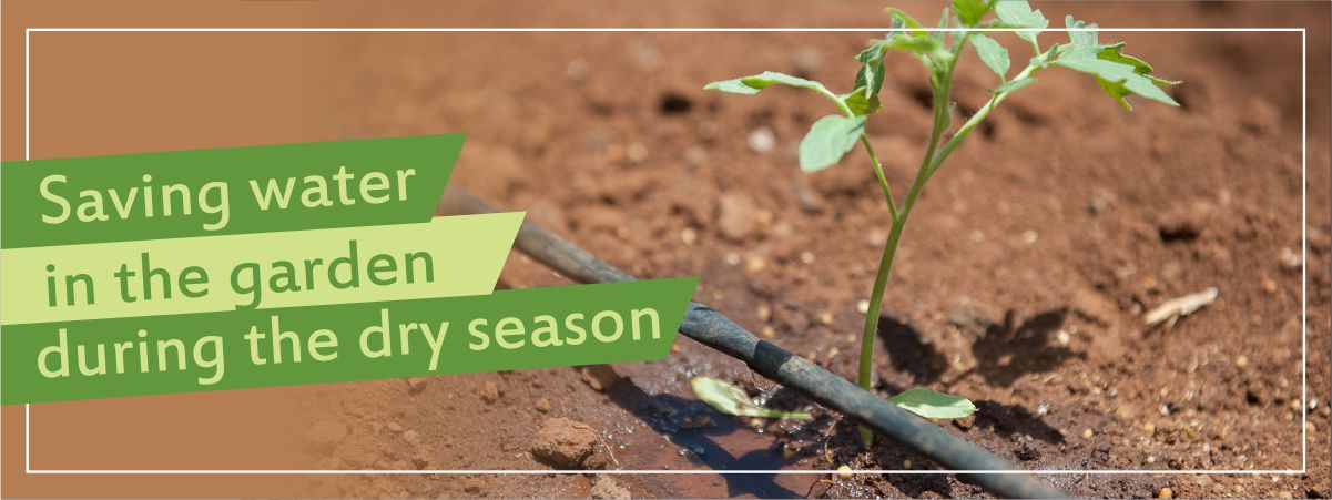 Wise Gardening during the Dry Winter Months