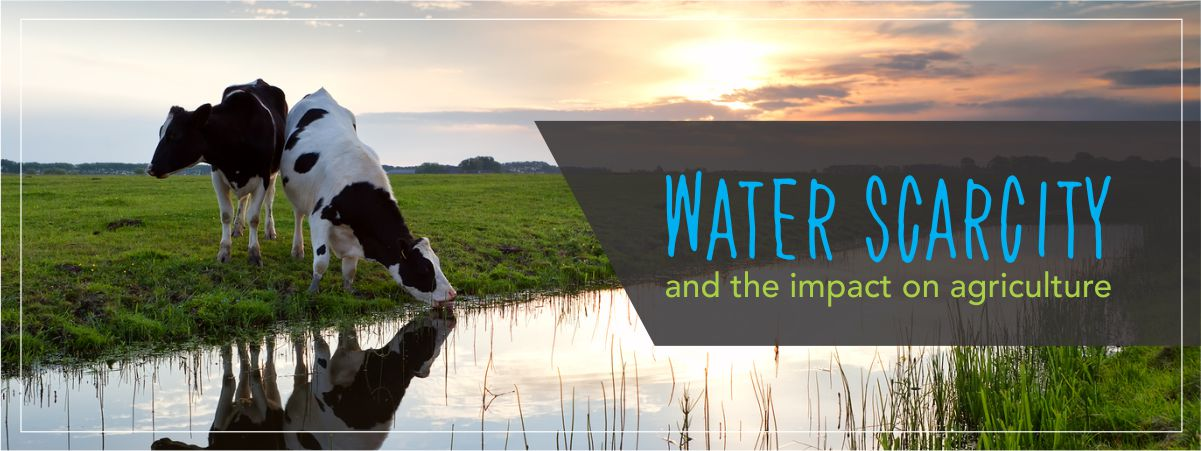 Water Scarcity Impact on Agriculture